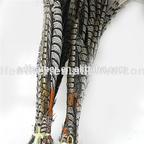 工場直接販売自然キジの尾の羽16-35 'レディゼブラキジ羽-フェザー問屋・仕入れ・卸・卸売り