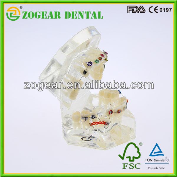 透明病理学的医学教育のための歯科用模型、 歯のモデル問屋・仕入れ・卸・卸売り