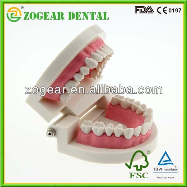 歯科用模型病理学的医学教育のための、 歯のモデル問屋・仕入れ・卸・卸売り